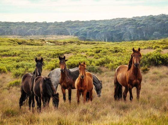 Sommar, sol och hästar